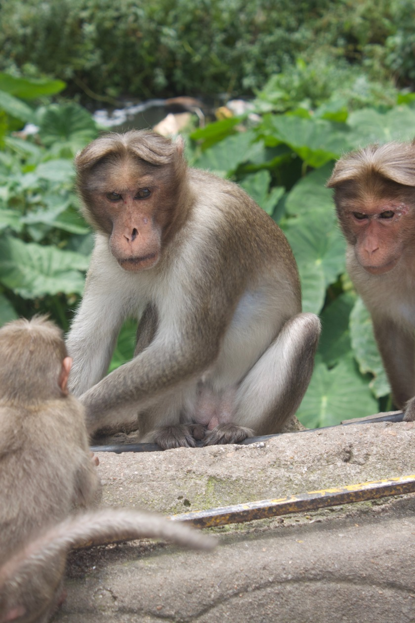 There are lots of Monkeys at Silver Cascade Falls